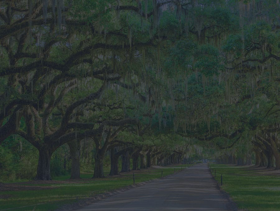 Live oak trees on a plantation in Charleston makes a perfect wedding venue